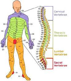 spinal map